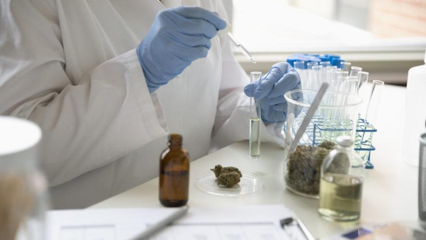 5 Scientific Studies That Support Using CBD Oil - Cannabis